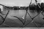 Hidden Swan 2